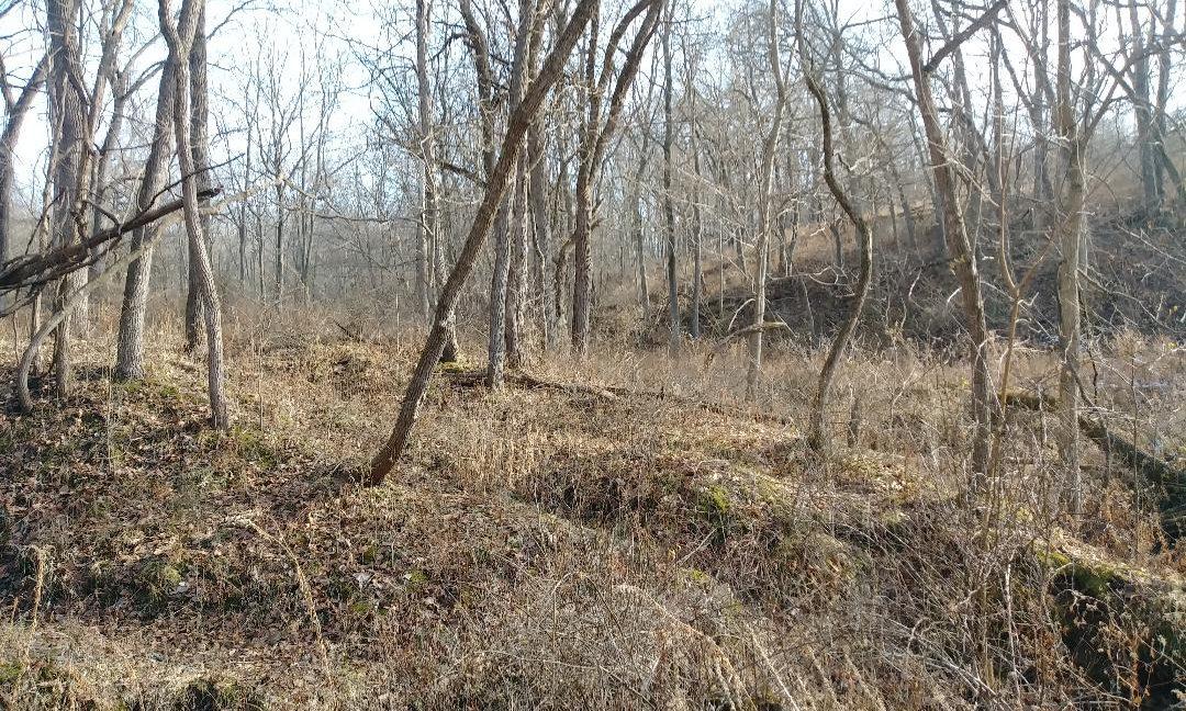 woods 6